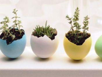 Modern Interior Plants | MODERNi