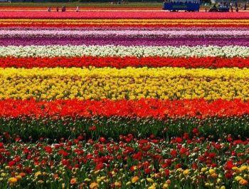 Modern Flower Garden | MODERNi