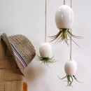 Fresh-home-design-with-Awesome-hanging-plants-pot