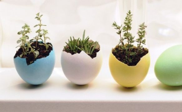 Innovative-And-Cute-DIY-Egg-Planters-For-The-Holiday-Season