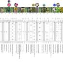 växtplan_arter_101027SwecoArchitects
