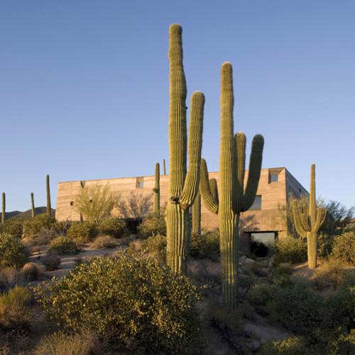 Desert_Courtyard_House_b_-Wendell_Burnette_Architects_dezeen_784_13